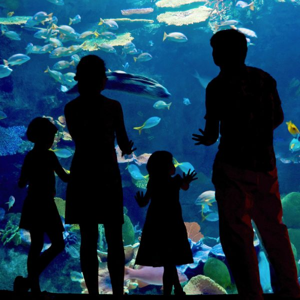 Silhouettes of family looking a fish in an aquarium